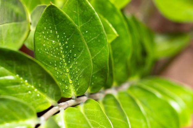 Gotas de água em uma folha de uma planta após a pulverização.