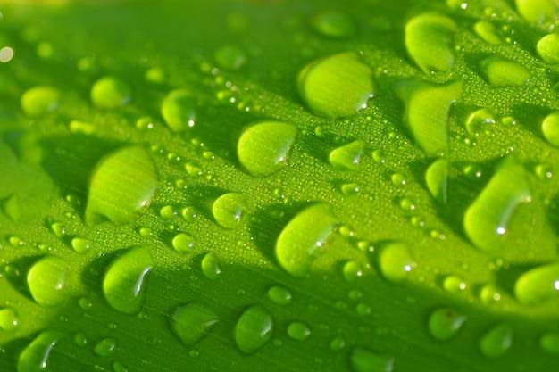 Gotas de água na folha verde closeup