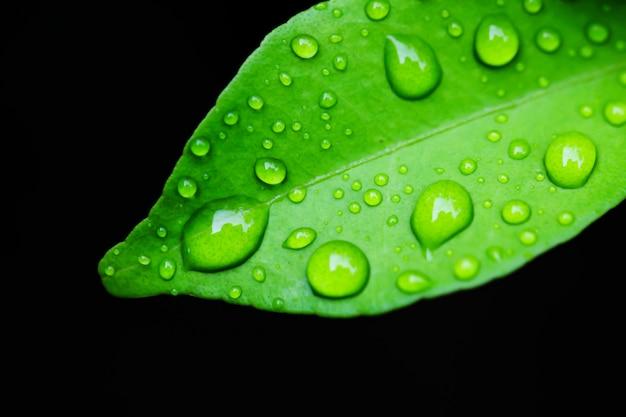 Gotas de água na folha verde.