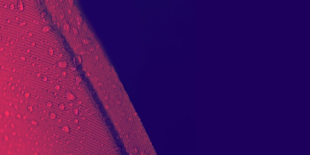 Gotas de água na textura de penas vermelhas contra o fundo colorido