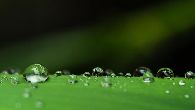 Gotas de água nas folhas gota de chuva verde da estação