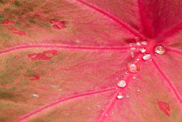 Gotas de água nas folhas