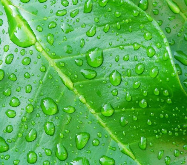 Gotas de água no fundo de folhas verdes, folhas de laranja