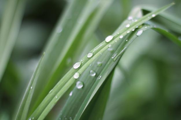 Gotas de água ou orvalho da manhã na grama verde fresca.