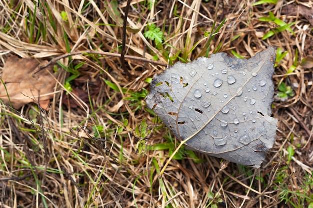 Gotas de água sobre folhas verdes no fundo da grama