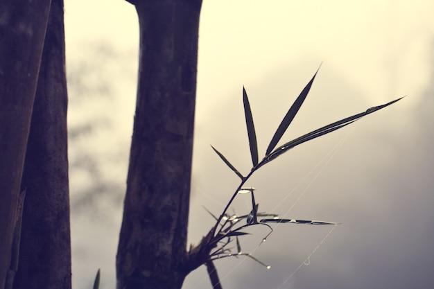 Gotas de bambu e água entre a névoa
