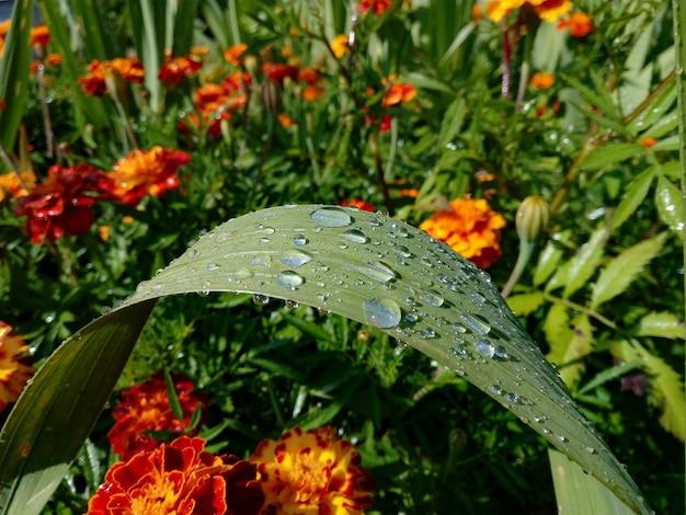 Gotas de chuva em uma folha verde em uma superfície de flores