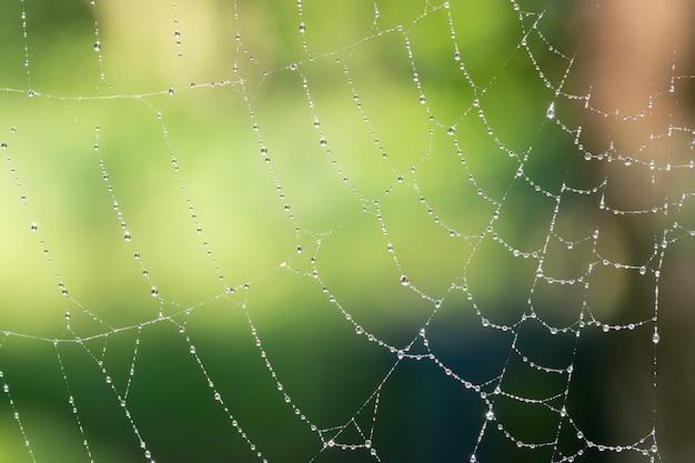 Gotas de fundo macro na teia de aranha