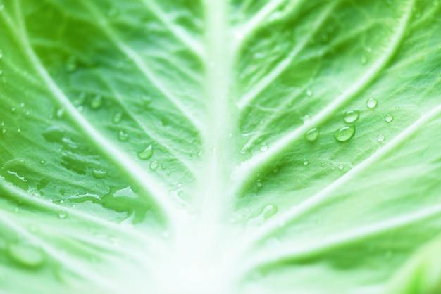 Gotas de orvalho da manhã na folha de repolho. conceito vegetal. fotos macro, vista superior
