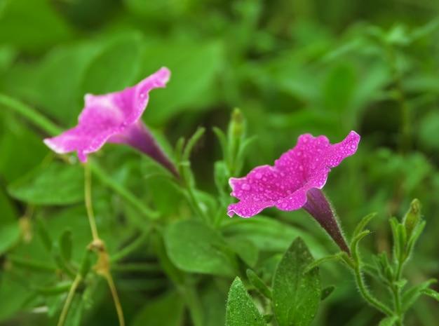 Gotas de orvalho em uma flor