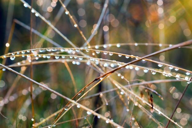 Gotas de orvalho na grama à luz do sol.