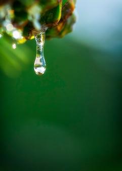 Gotas de orvalho na linda grama verde, plano de fundo close-up