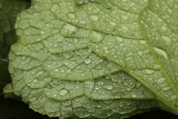 Gotas de orvalho nas flores e plantas, dia chuvoso, foto macro e close-up, superfície da natureza.