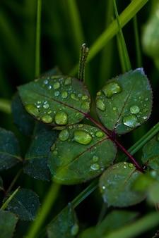 Gotas de orvalho nas folhas