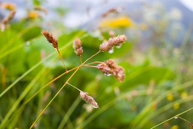 Gotas de orvalho nas plantas e flores no campo, orvalho da manhã e gotas de chuva macro e close-up