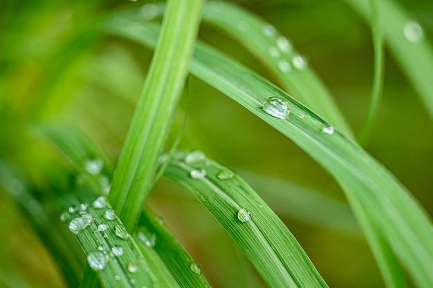 Gotas do close up da água na folha verde após a chuva, a opinião da natureza no jardim no verão.