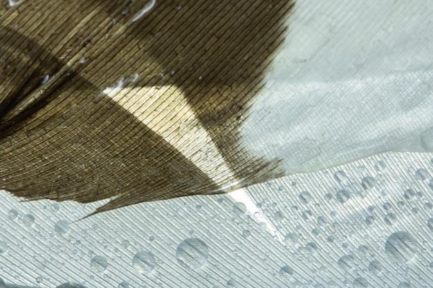Gotas macro do fundo nas penas brancas.
