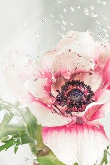 Gotículas em uma flor de anêmona
