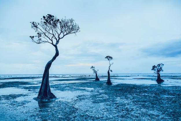 Graciosas silhuetas das árvores de mangue. sumba.