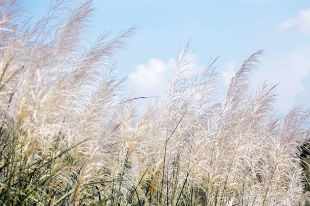 Grama alta branca em dia de vento na temporada de inverno