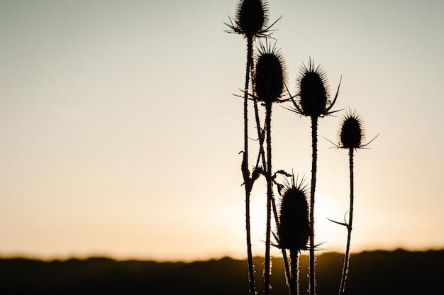 Grama amarela de silhueta no campo à luz do sol ao pôr do sol. mundo, conceito de dia do ambiente do país. amanhecer deslumbrante do prado com luz. outono, primavera, verão.