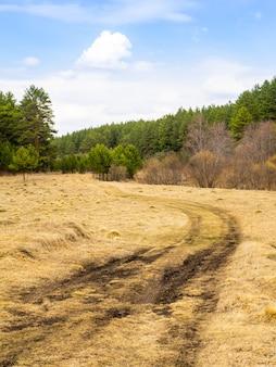 Grama amarela seca contra um fundo de floresta verde e céu azul brilhante.