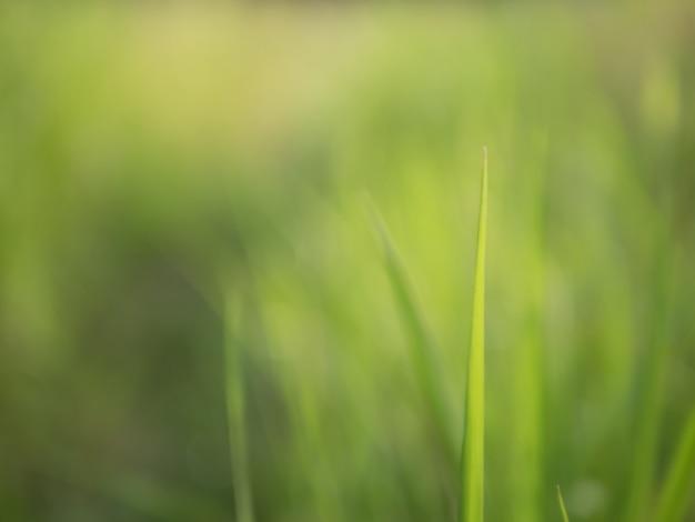 Grama, arquivado, de manhã, ligado, verde natural