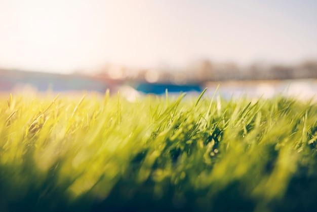 Grama close-up, ligado, campo futebol