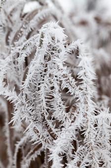 Grama coberta de geada e neve no inverno