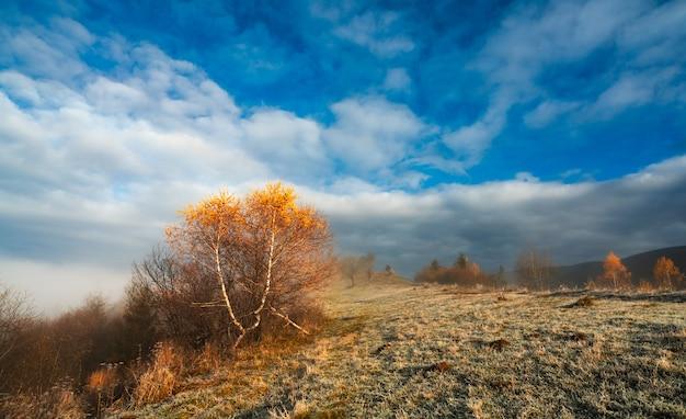 Grama congelada coberta de geada branca contra um lindo céu azul e névoa branca e fofa