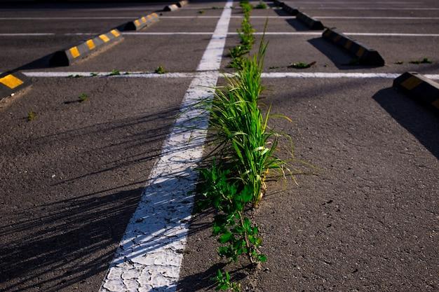 Grama crescendo através do asfalto no estacionamento no verão