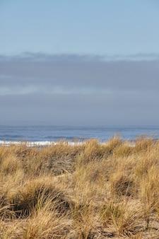 Grama da praia pela manhã em cannon beach, oregon