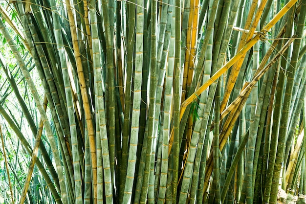 Grama de bambu na opinião do close up do sri lanka. paisagem do ceilão