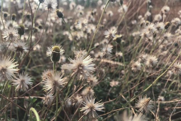 Grama de flor branca na natureza