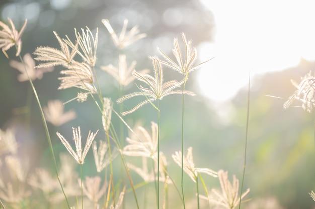 Grama de flor com luz do sol