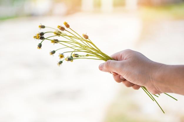 Grama de flor na mão no dia de verão