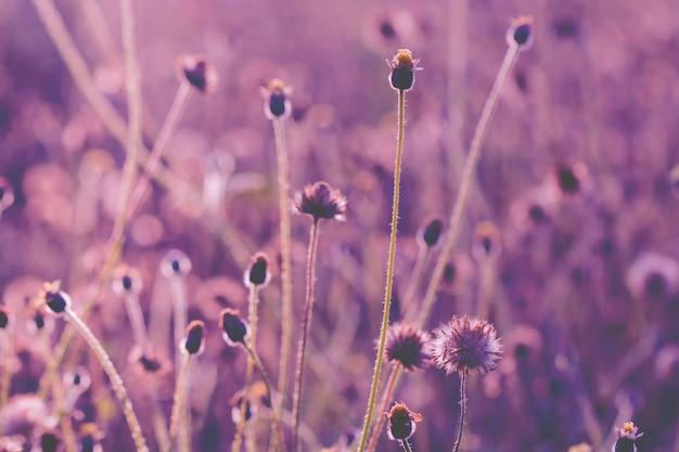 Grama de flores coloridas feita com gradiente de fundo