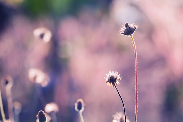 Grama de flores coloridas para plano de fundo