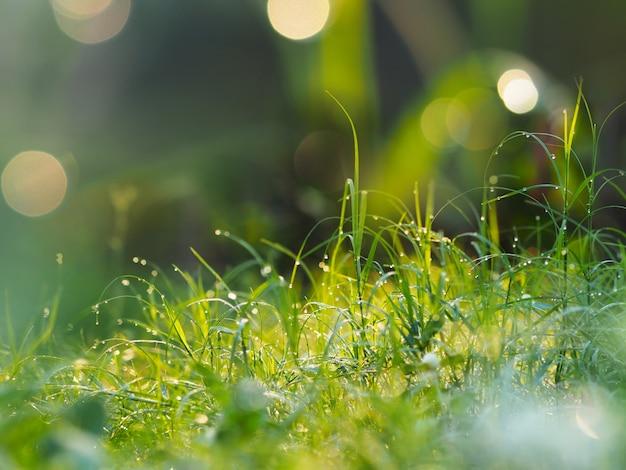 Grama de folhas verdes no campo