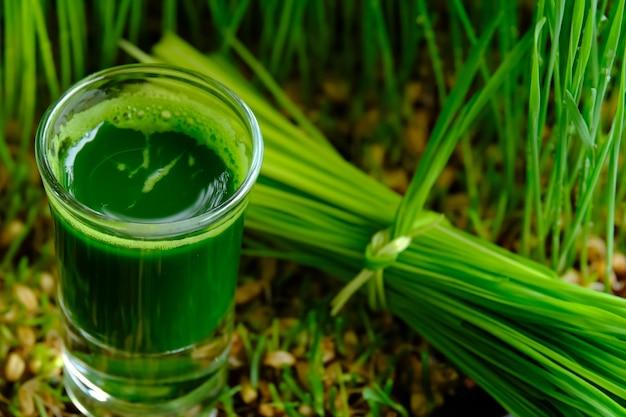 Grama de trigo para sumo e vida saudável