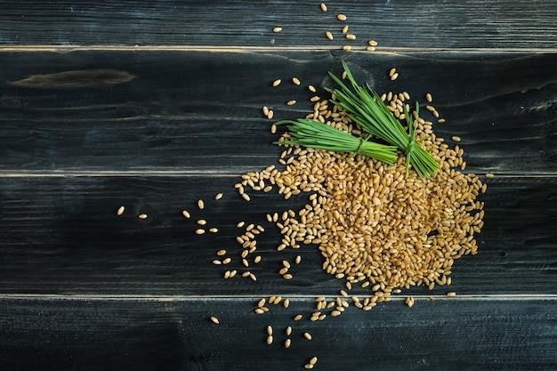 Grama do trigo