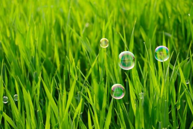 Grama dos prados e bolhas de sabão