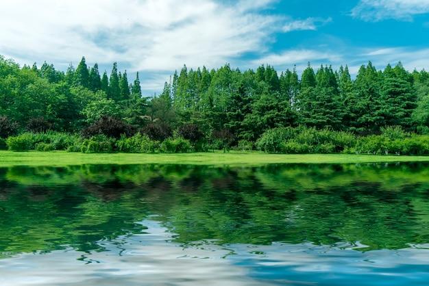 Grama e árvores no parque sob o céu azul Foto Premium