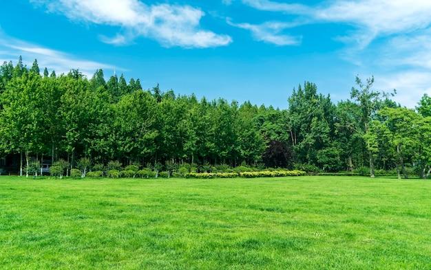 Grama e árvores no parque sob o céu azul