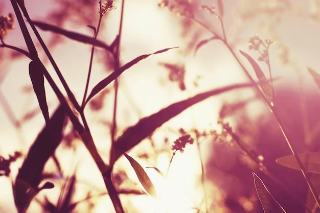 Grama e flores ao pôr do sol nos campos, fundo desfocado da natureza