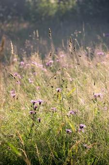 Grama e flores do campo do verão