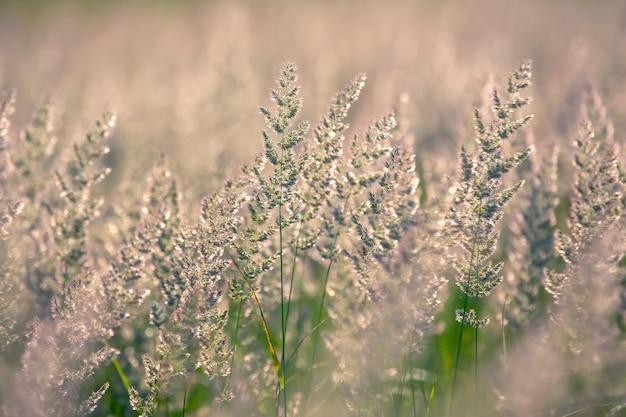 Grama e flores do campo em contraluz. natureza e botânica floral