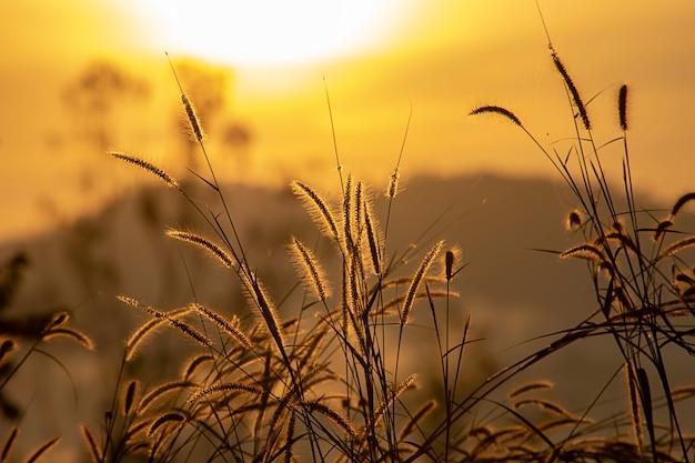 Grama e imagem de fundo obscura do sol na manhã.