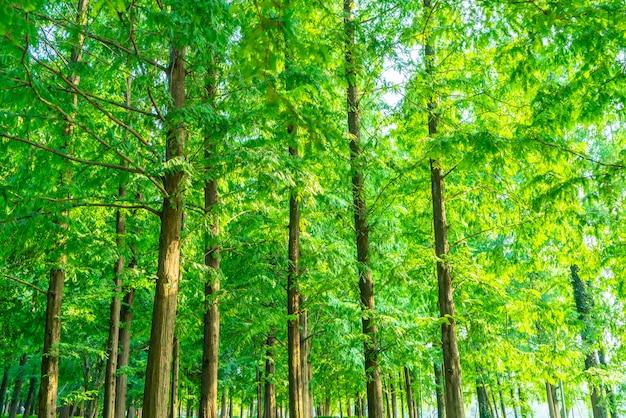 Grama e madeiras verdes no parque