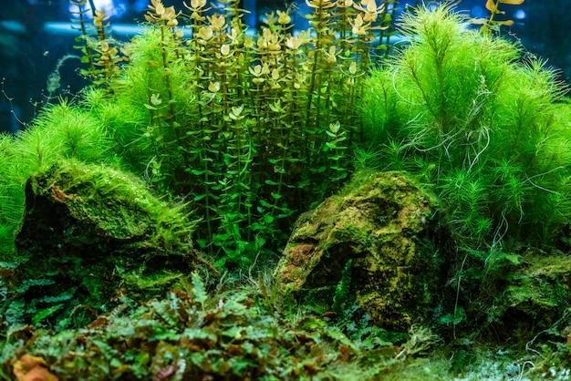 Grama e pedras marinhas de algas marinhas do oceano
